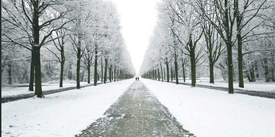 Kassel park vanlife